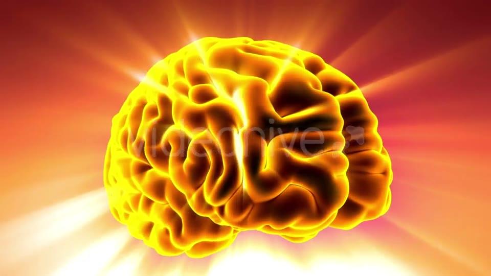Anatomy Of Human Brain Download Videohive 20354367