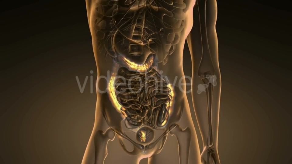 Anatomy Scan of Human Colon - Download Videohive 19894742