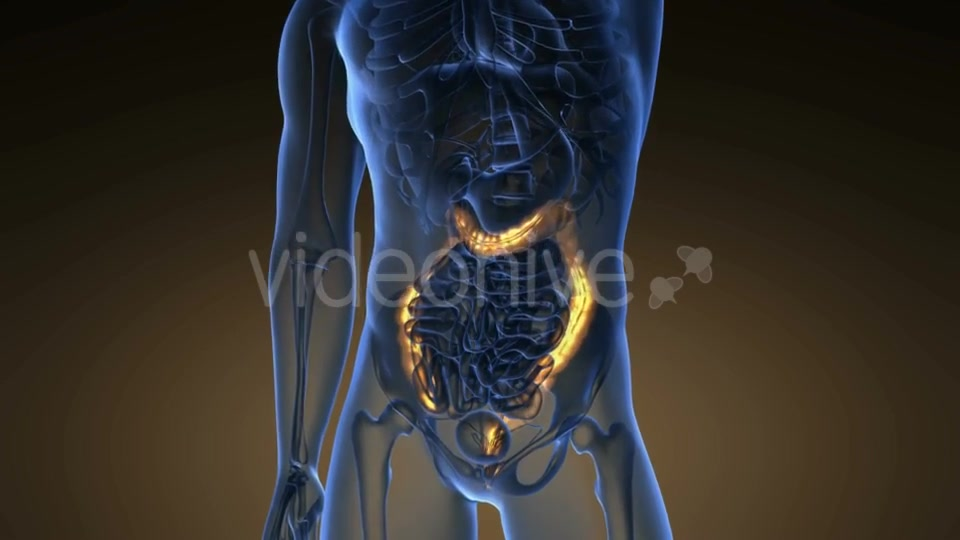 Anatomy Scan of Human Colon - Download Videohive 21225392