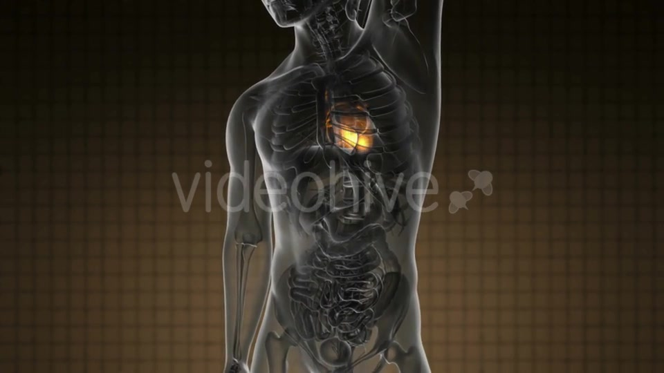Anatomy Scan of Human Heart - Download Videohive 19109522