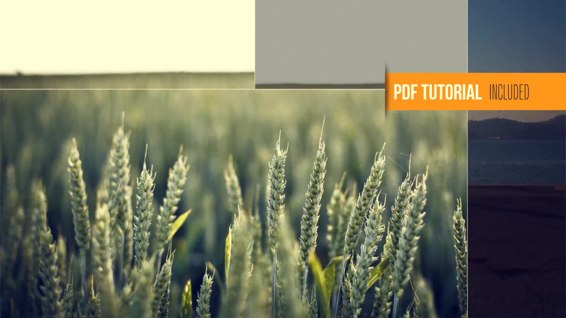 Clean Photography Promo - Download Videohive 6552029