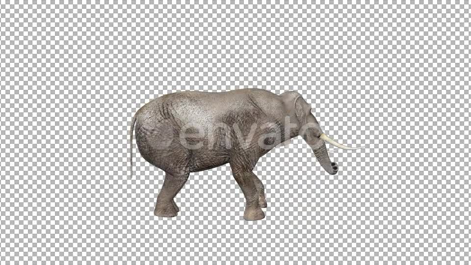 Elephant Walk Attack - Download Videohive 22081985