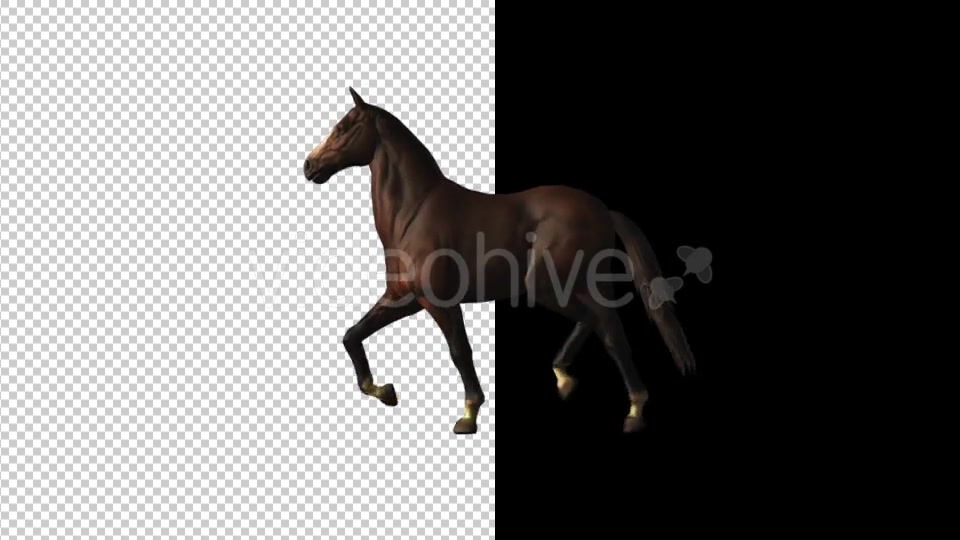 Horse Canter Loop - Download Videohive 18412827