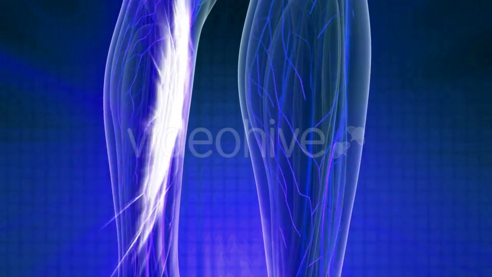 Human Body with Glow Blood Vessels - Download Videohive 20978978