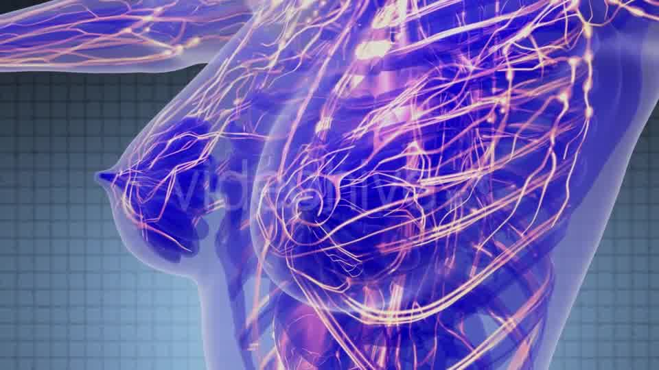 Human Body with Glow Blood Vessels - Download Videohive 21388863