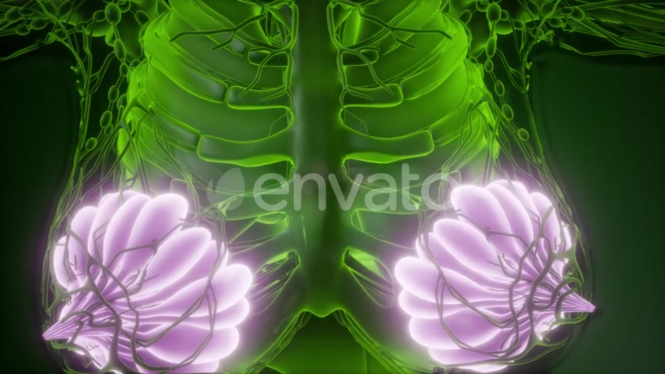 Human Body with Visible Glow Mammary Gland - Download Videohive 22134556