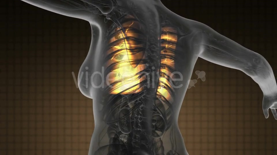 Human Body with Visible Lungs - Download Videohive 19369324