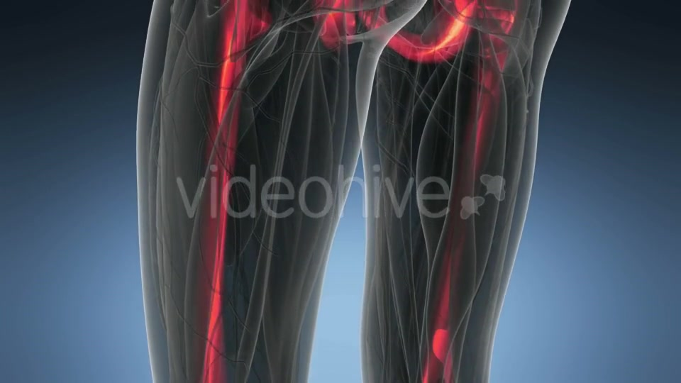Human Body with Visible Skeletal Bones - Download Videohive 20902733