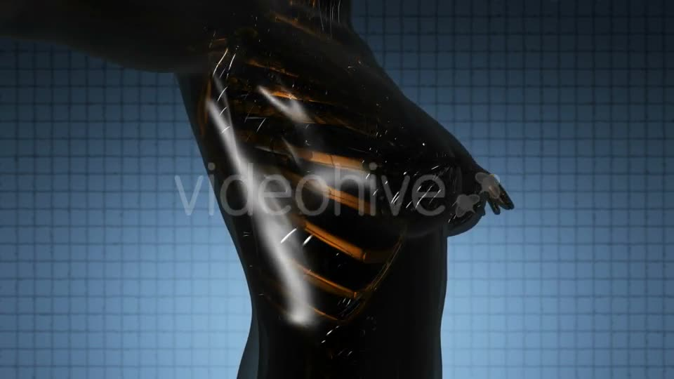 Human Body with Visible Skeletal Bones - Download Videohive 21264216