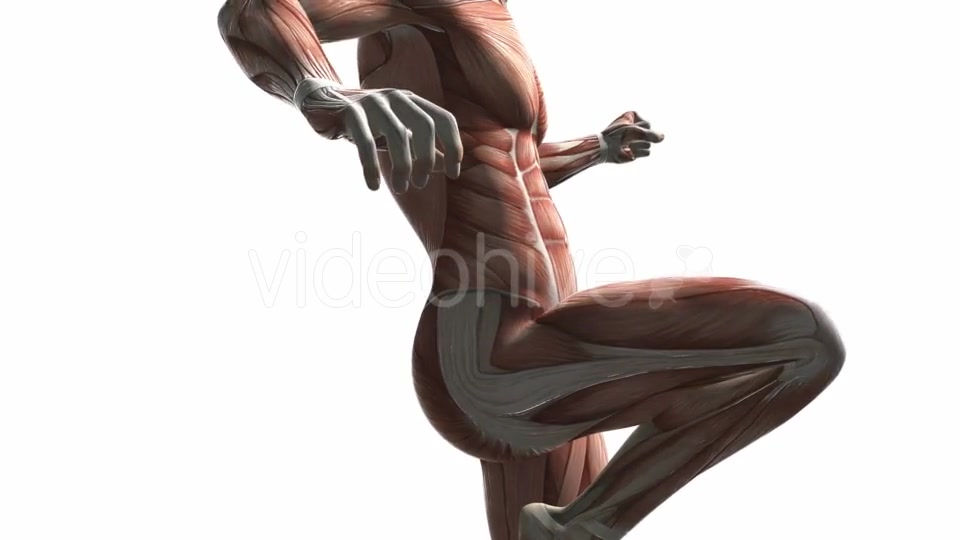 Human Muscle Anatomy - Download Videohive 20354158