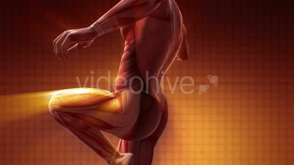 Human Muscle Anatomy - Download Videohive 20354188