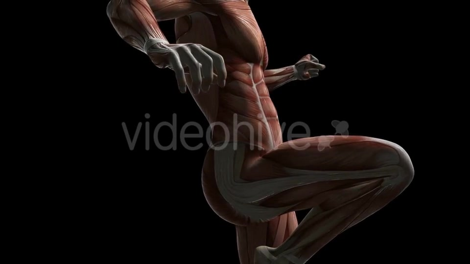 Human Muscle Anatomy - Download Videohive 20506645