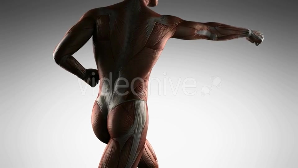 Human Muscle Anatomy - Download Videohive 21485181