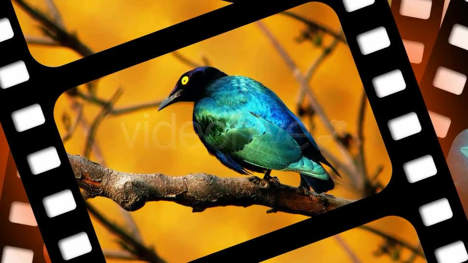 Slide Show - Download Videohive 157400