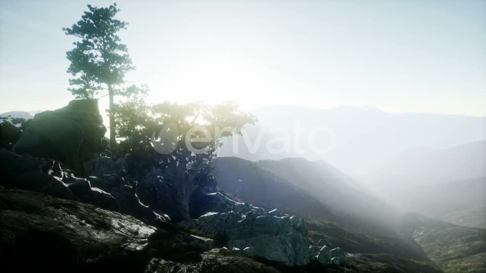 Sun Beams Through Trees - Download Videohive 21843403