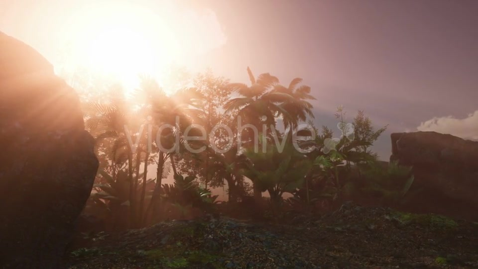 Sunset Beams Through Palm Trees - Download Videohive 20626067