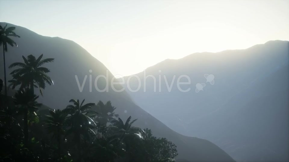 Sunset Beams Through Palm Trees - Download Videohive 21041331