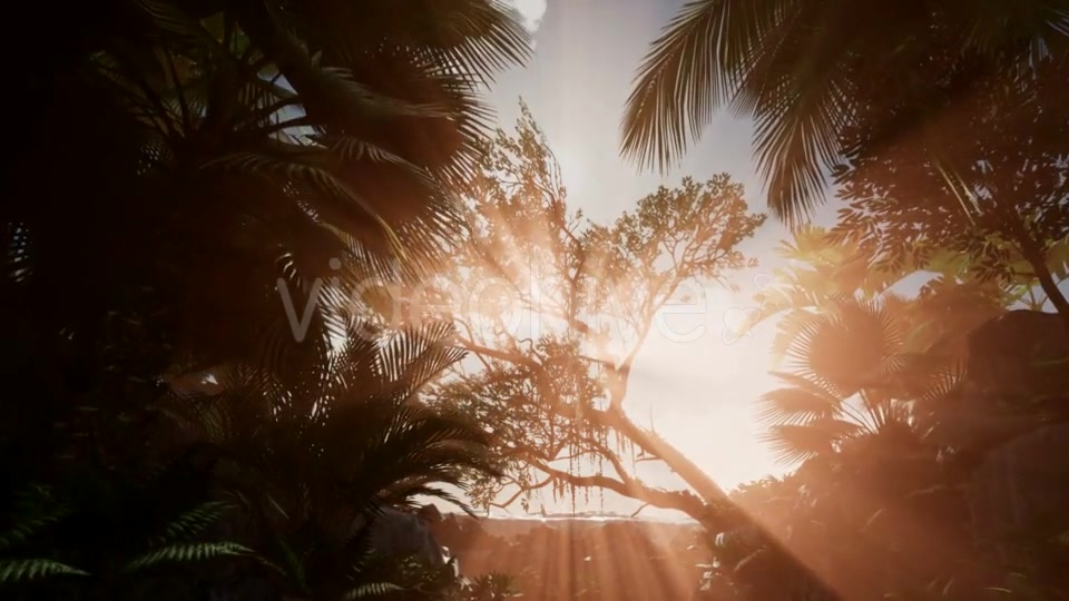 Sunset Beams Through Palm Trees - Download Videohive 21041363