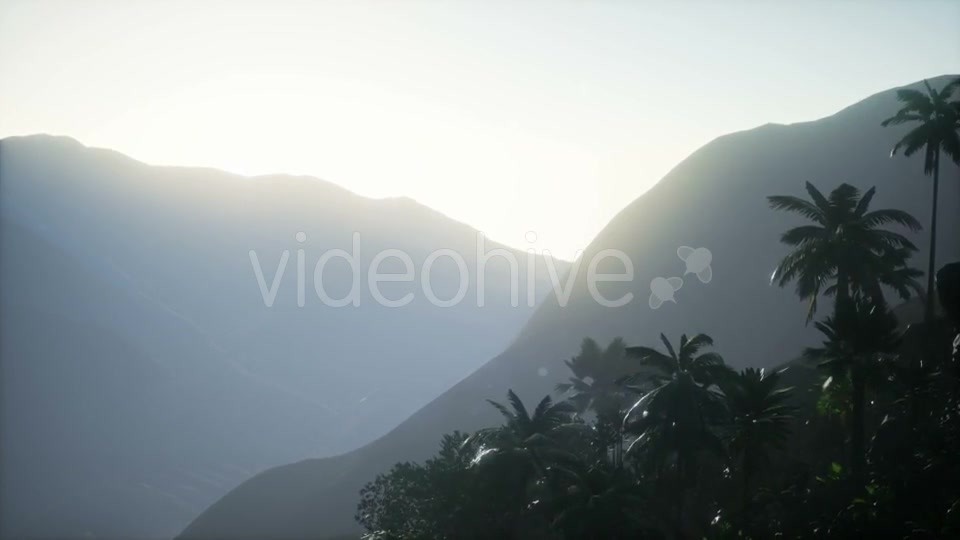 Sunset Beams Through Palm Trees - Download Videohive 21225424