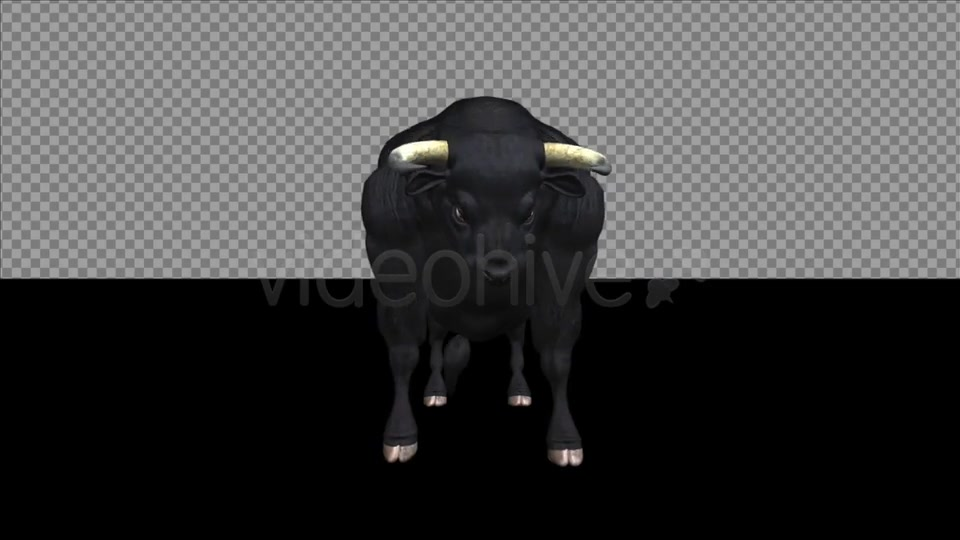 Bull Pack of 2 Videohive 6537216 Motion Graphics Image 4