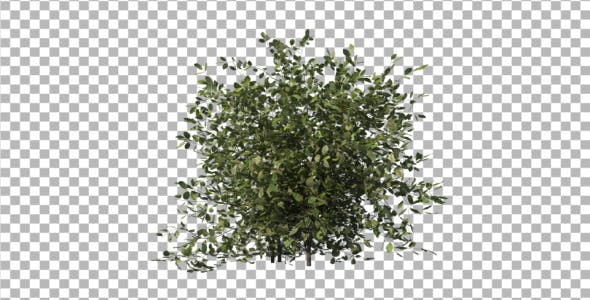 Bush Type 1 - Videohive Download 6741533