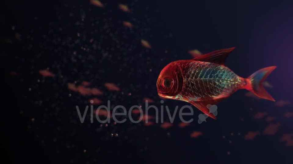 Lingering Semi transparent Colorful Fish Videohive 19828300 Motion Graphics Image 1