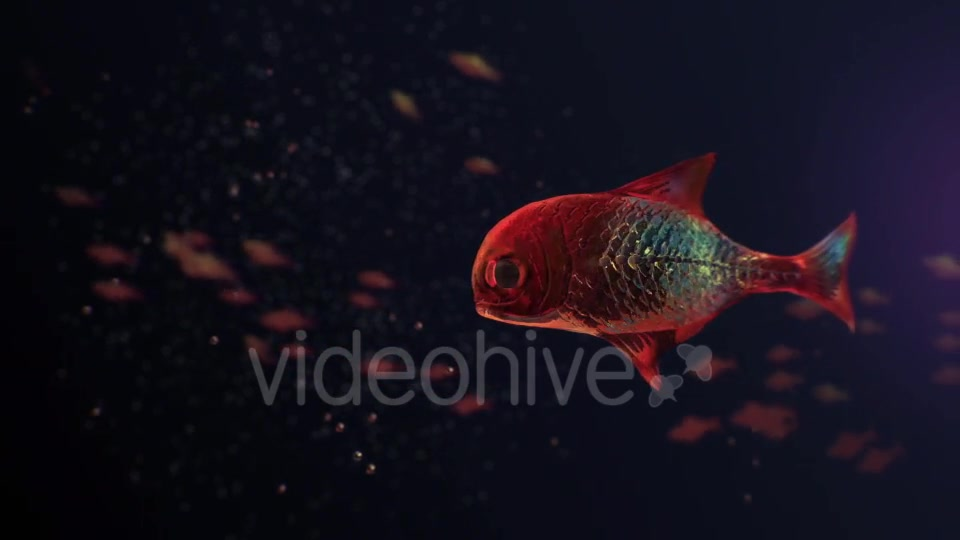Lingering Semi transparent Colorful Fish Videohive 19828300 Motion Graphics Image 2