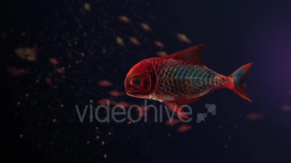 Lingering Semi transparent Colorful Fish Videohive 19828300 Motion Graphics Image 4