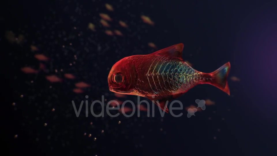Lingering Semi transparent Colorful Fish Videohive 19828300 Motion Graphics Image 5