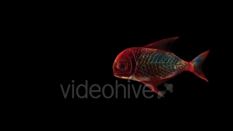 Lingering Semi transparent Colorful Fish Videohive 19828300 Motion Graphics Image 7