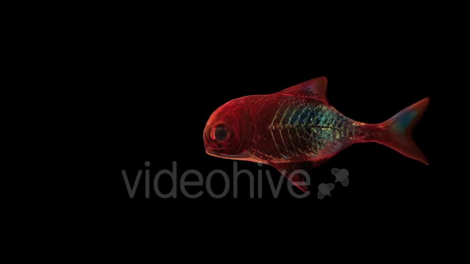 Lingering Semi transparent Colorful Fish Videohive 19828300 Motion Graphics Image 8