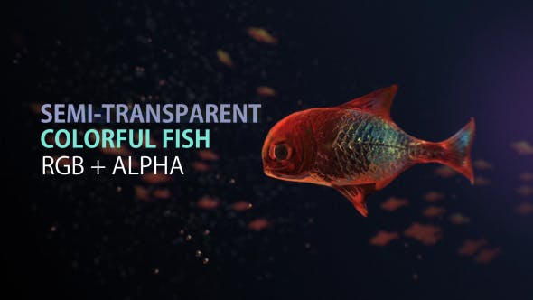 Lingering Semi transparent Colorful Fish - Download Videohive 19828300