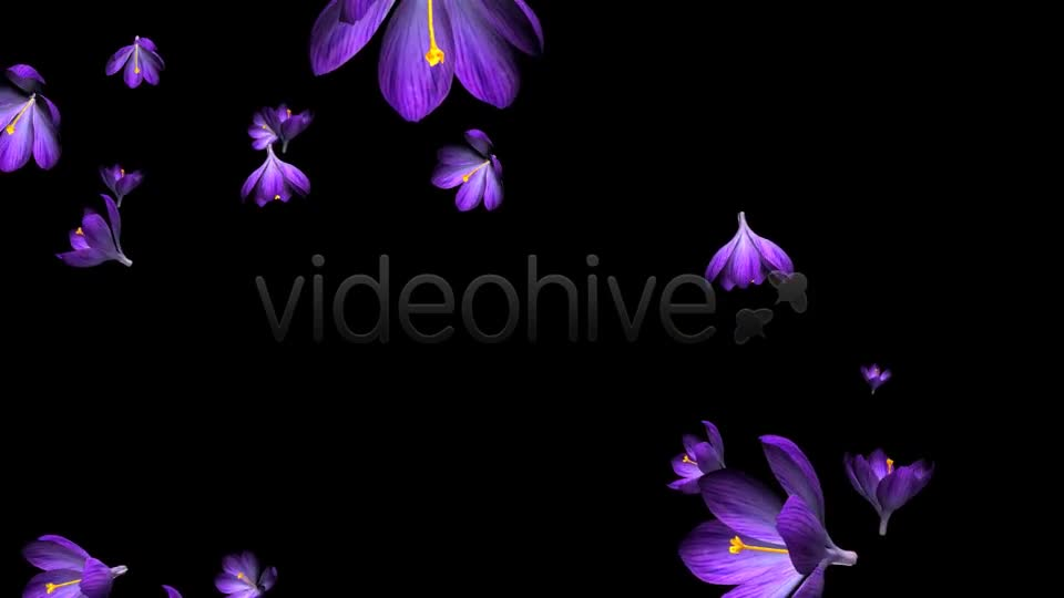 Rain of Flowers Blue Crocus Pack of 2 Videohive 6640839 Motion Graphics Image 1