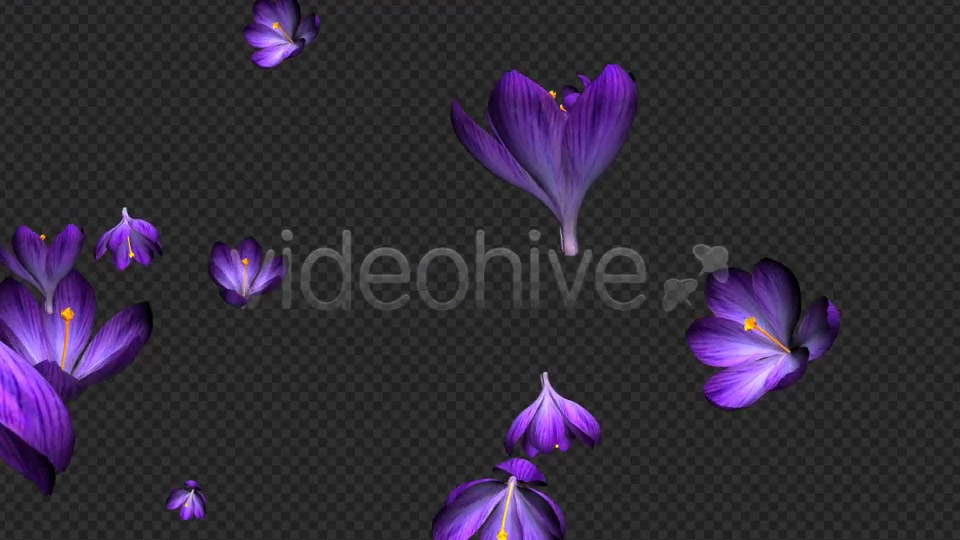 Rain of Flowers Blue Crocus Pack of 2 Videohive 6640839 Motion Graphics Image 4