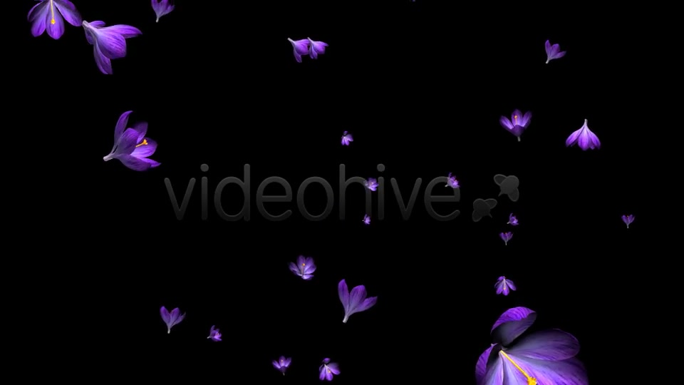 Rain of Flowers Blue Crocus Pack of 2 Videohive 6640839 Motion Graphics Image 6