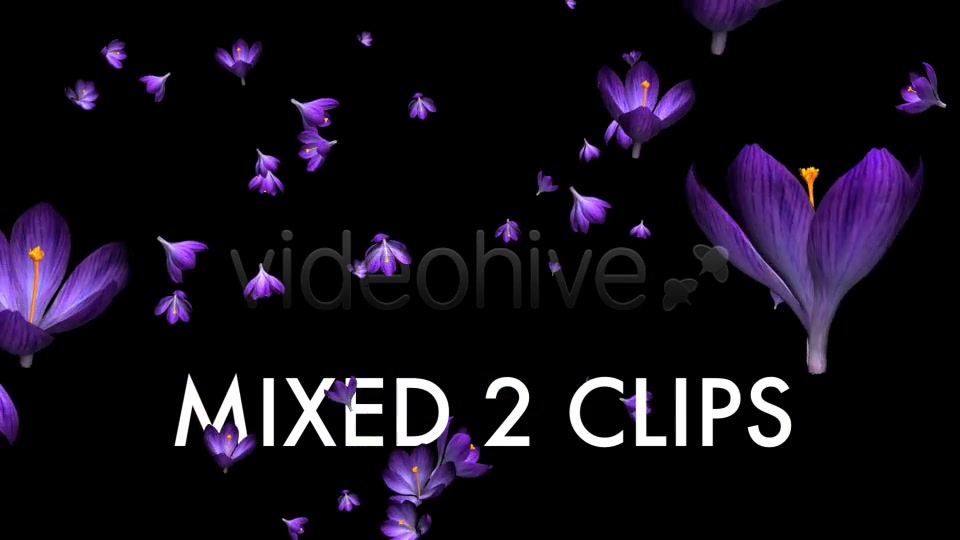 Rain of Flowers Blue Crocus Pack of 2 Videohive 6640839 Motion Graphics Image 8