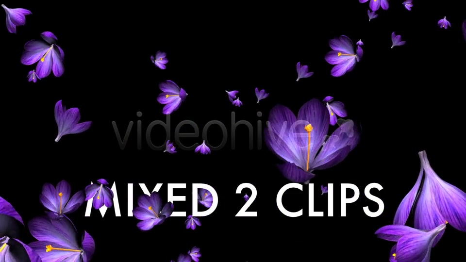 Rain of Flowers Blue Crocus Pack of 2 Videohive 6640839 Motion Graphics Image 9
