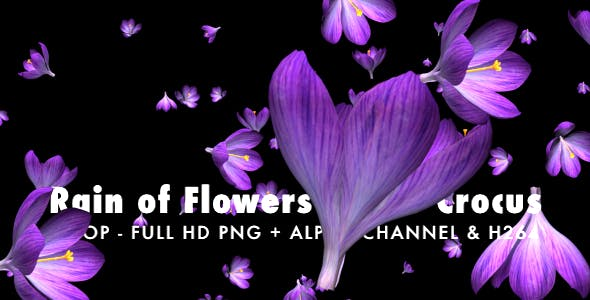 Rain of Flowers Blue Crocus Pack of 2 - Download 6640839 Videohive