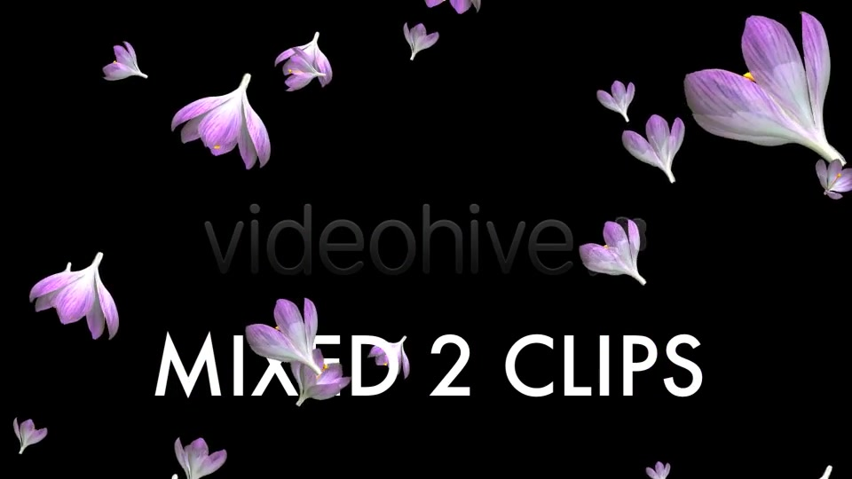 Rain of Flowers Pink Crocus Pack of 2 Videohive 6640866 Motion Graphics Image 10