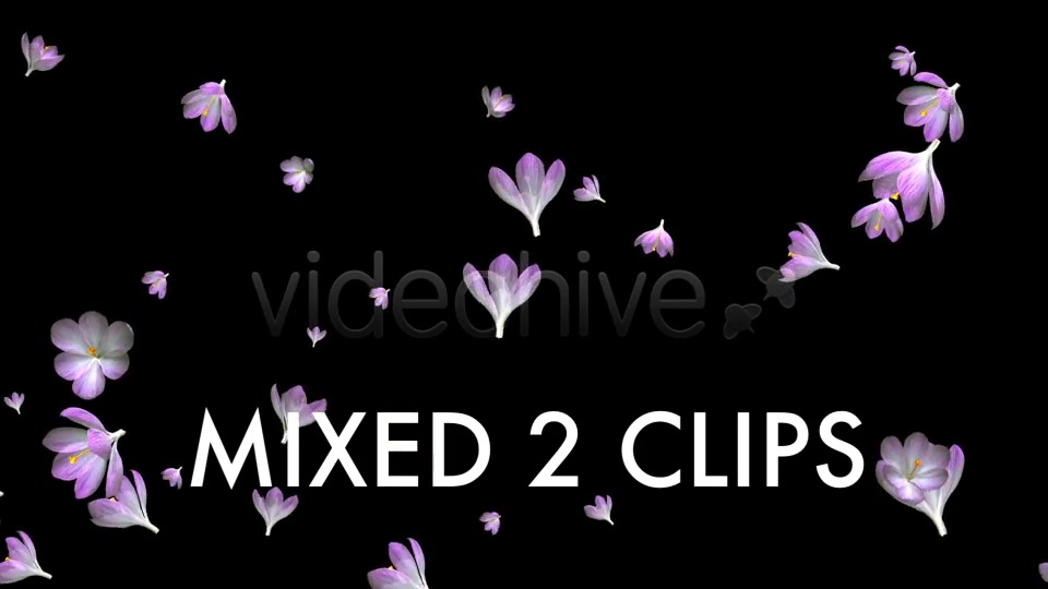 Rain of Flowers Pink Crocus Pack of 2 Videohive 6640866 Motion Graphics Image 11