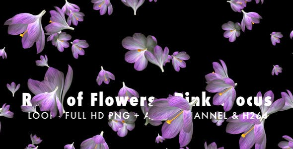 Rain of Flowers Pink Crocus Pack of 2 - Download Videohive 6640866