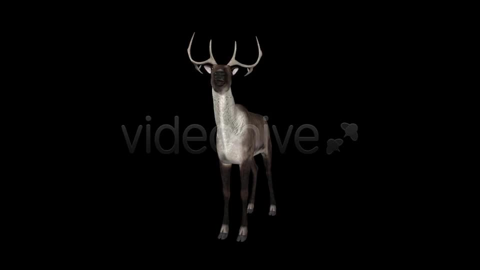 Reindeer Videohive 6490511 Motion Graphics Image 1