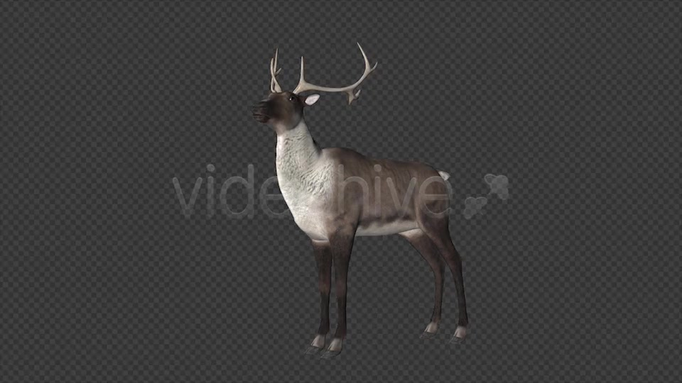 Reindeer Videohive 6490511 Motion Graphics Image 10