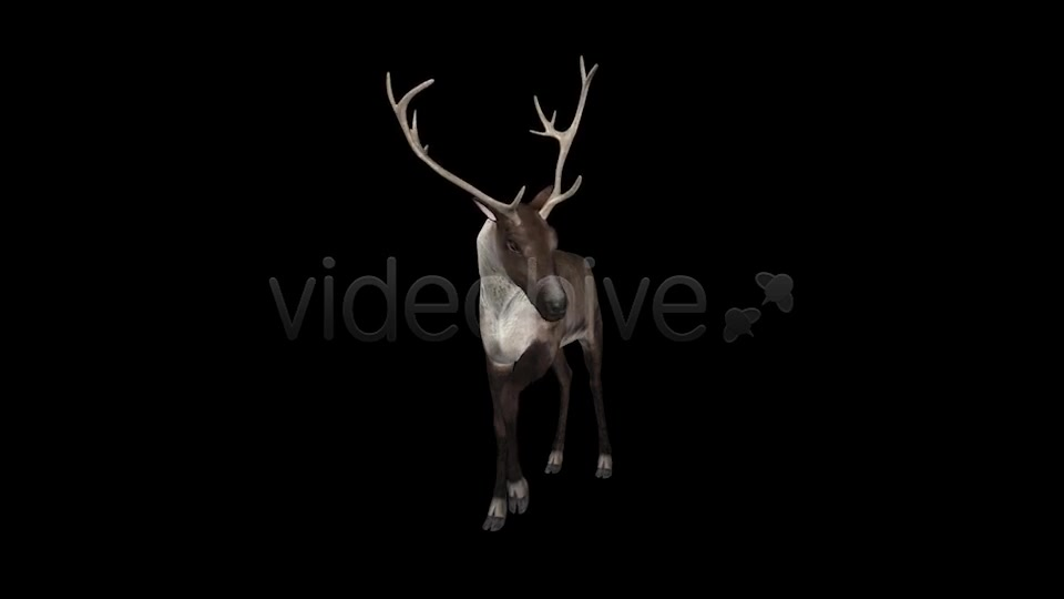 Reindeer Videohive 6490511 Motion Graphics Image 2