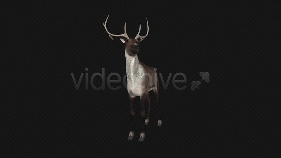 Reindeer Videohive 6490511 Motion Graphics Image 4