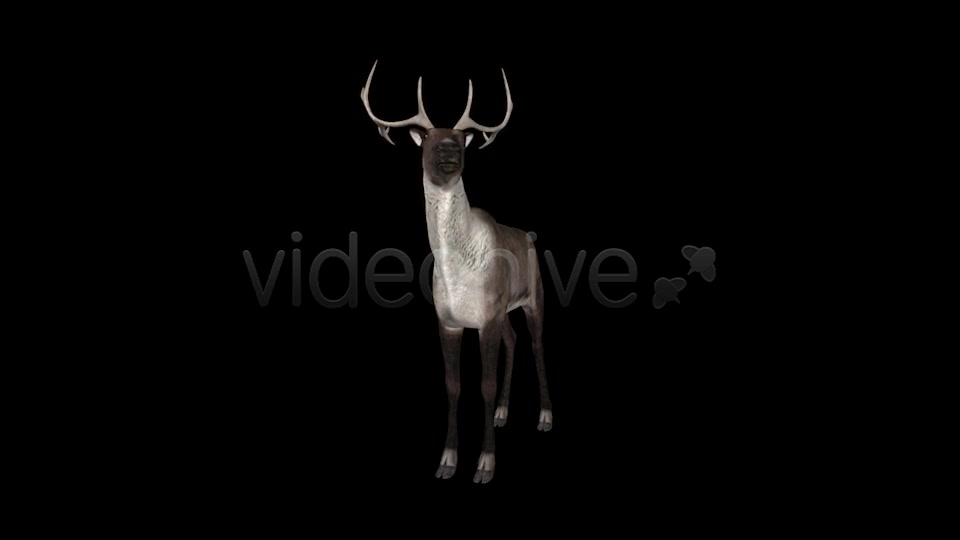 Reindeer Videohive 6490511 Motion Graphics Image 5