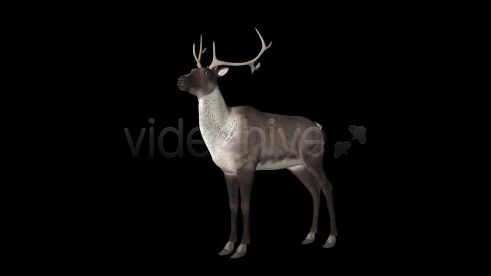 Reindeer Videohive 6490511 Motion Graphics Image 6