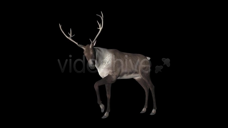 Reindeer Videohive 6490511 Motion Graphics Image 7