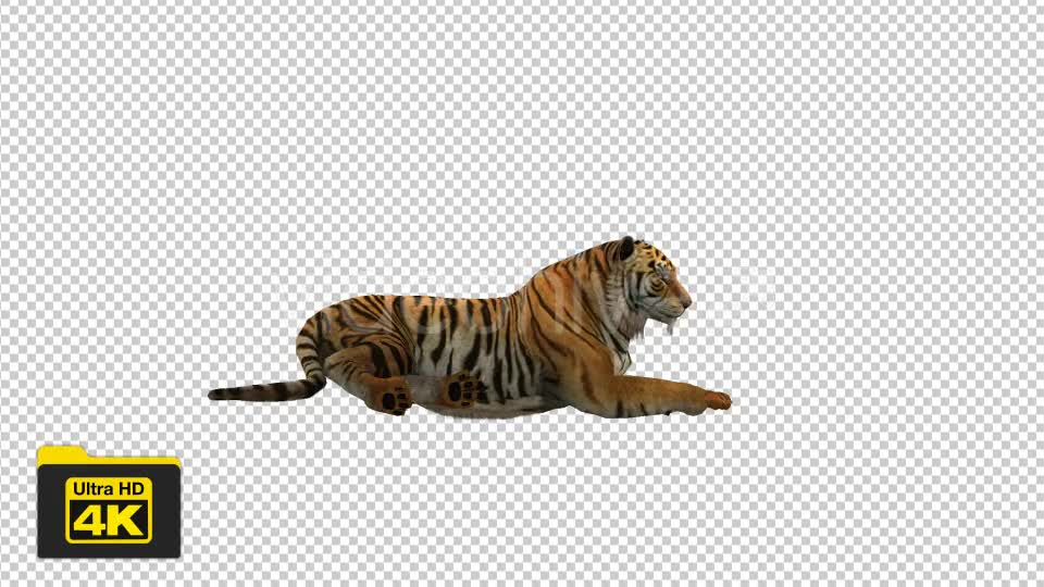 Tiger Sitting Videohive 19735680 Motion Graphics Image 1