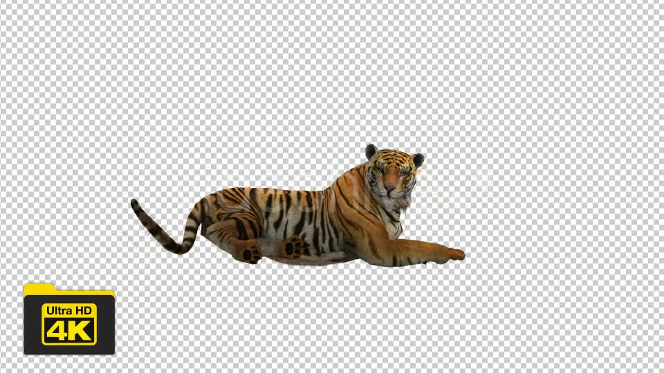 Tiger Sitting Videohive 19735680 Motion Graphics Image 2